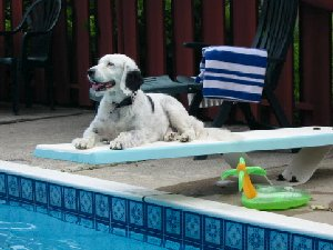 Molly the original Spotted Dog, acting as lifeguard!
